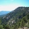 Convocatoria abierta de las Ayudas para Tratamientos Selvícolas de Montes y superficie forestal