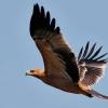 "II Jornadas ""Turismo Ornitológico"" en Yeste"