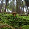 Jornadas Micológicas, naturaleza en estado puro