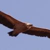 Turismo ornitológico por la Sierra del Segura