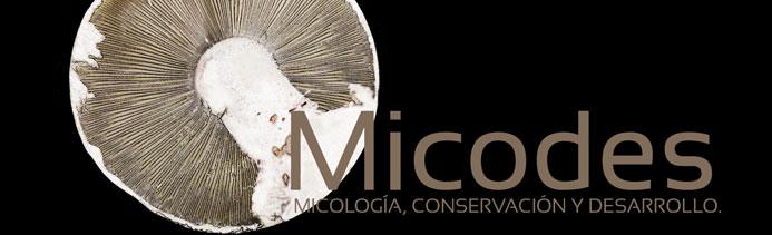 micodes_cabecera
