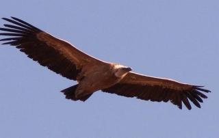 ornitología S. del Segura