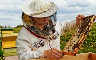 Apicultura-miel-abejas