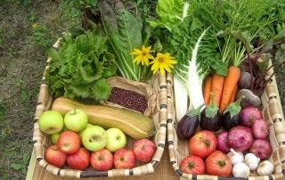Agricultura-biodinamica-3